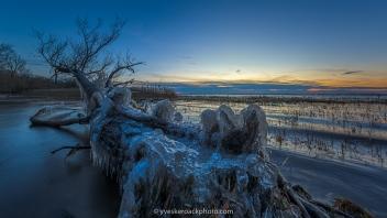 Arbre mort recouvert de glace sur un rivage de l'Île-Saint-Bernard au coucher du soleil à Chateauguay, Québec Canada