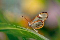 Papillons en liberté 2018