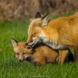 Tout l'amour d'une mère