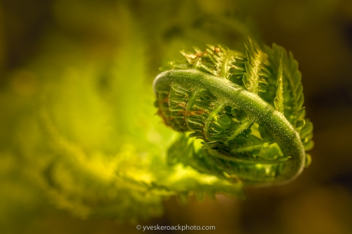 Ferns are emerging in Montreal Botanical Garden!