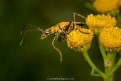 Vie de bestiole / A bug's life
