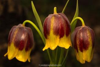 Fleurs de mai au Jardin Botanique de Montréal
