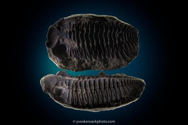Fossile de 5 cm de large, empilement de 20 images pour une netteté optimale