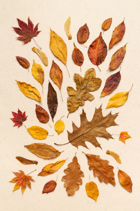 Top view of autumn leaves on a creme hand made textured paper ba