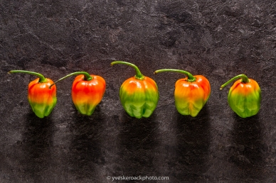 Five colorful habañero peppers viewed from top on a dark stone background